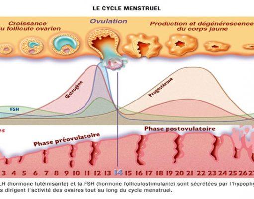 Le cycle menstruel chez la jeune fille