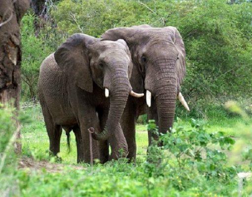 Des éléphants (image d'illustration)